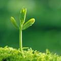 """Tập đoàn CEO phát động """"sống xanh"""" vì môi trường - Tập đoàn CEO"""